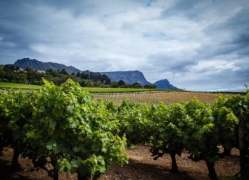 ©Curated Experience_Exploring the Winelands