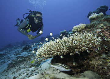 10NorthIsland Dinving Reef©Wilderness Safaris_Anthony Grote