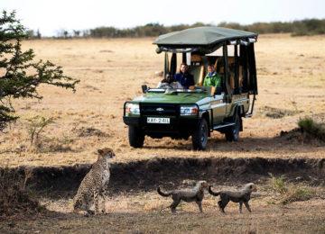 11 Kenia_MaraPlainsCamp-Luxus Safari_Privatsafari©GreatPlainsConservation