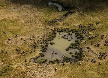 15 Kenia_Luxus Safari_MasaiMara©GreatPlainsConservation