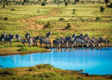16 Kenia Luxus Safari_olDonyoLodge©GreatPlainsConservation