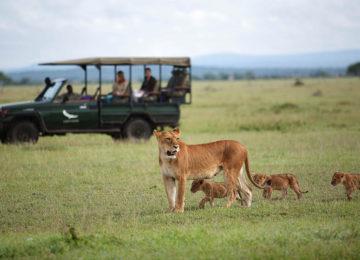 2 Serengeti Löwen Luxus Safari Grumeti ©andBeyond