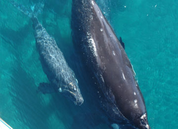 2 Whalewatching_Argentinien (gentileza Sub. Tmo Chubut)©Gadorviajes _ Argentinean Ministry of Tourism