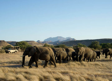 5 DamaralandCamp_Luxusreise_Namibia_WildernessAir_Elefanten©Wilderness Safaris_Dana Allen