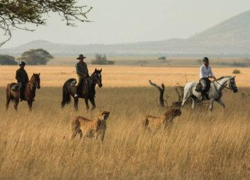 6 Kenia_olDonyoLodge-Luxus Safari-Pferdesafari©GreatPlainsConservation