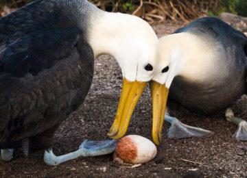 Albatross © Kleintours