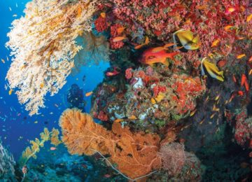 Alphonse Island-experiences-scuba-diving