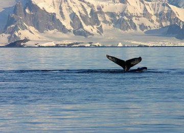 Antarktis Wahl
