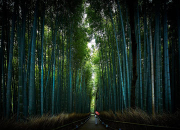 Arashiyama Bamboo Forest ©The Ritz Carlton Kyoto