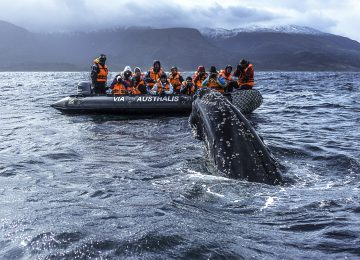 Australis Kreuzfahrt zum Kap Hoorn Chile Luxury Select Luxury Travel Chile Patagonien