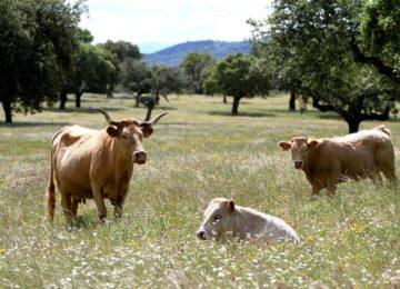 Bauernhofurlaub©Spanien