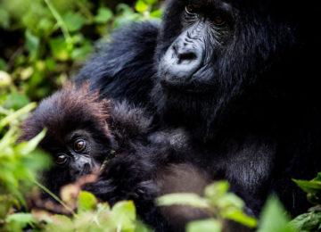 Afrika – Ruanda