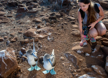 Blue-footed-booby © Kleintours