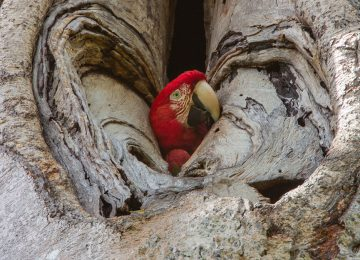 Celebrating Ecoturism – Lucas Bustamante