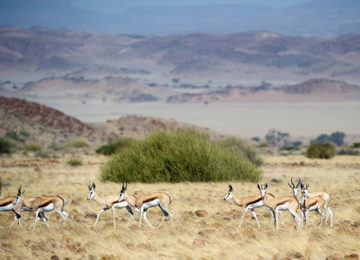 DamaralandCamp_Luxusreise_Namibia_Luxussafari©Wilderness Safaris