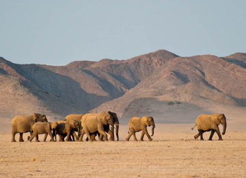 DamaralandCamp_Luxusreise_Namibia_Luxussafari_Elefanten©Wilderness Safaris