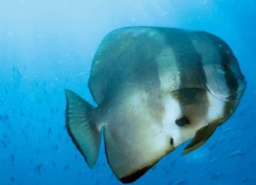 Diving©Constance Lemuria Resort Praslin