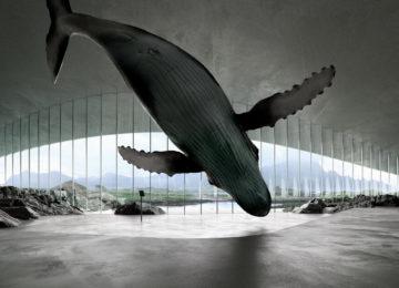 Luxusreise Norwegen The Whale Museum