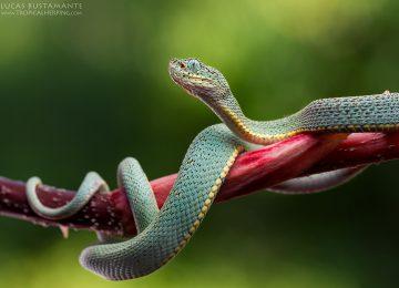 Fauna – Amphibians & Reptiles – Lucas Bustamante (5)