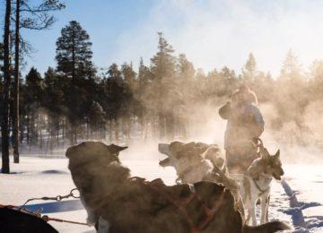 Finnland Huskyschlitten Javri Lodge