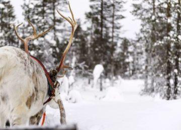 Finnland Schneestimmung avri Lodge