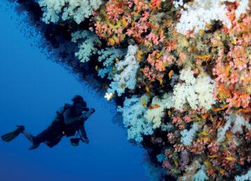 Four Seasons Resort Desroches Island©Korallen