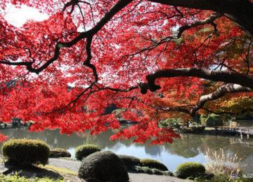 Herbstlaubfärbung © JNTO