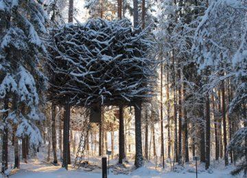 Vogelnest-Zimmer Treehotel Schweden Lappland