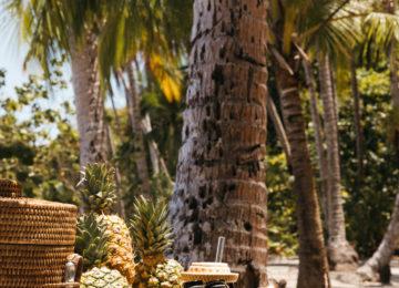 Palmen©Islas Secas Resort