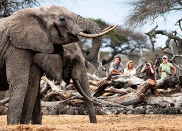 Afrika – Kenia