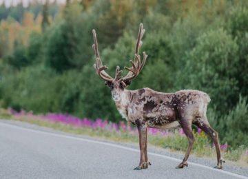 Lappland© Finnland
