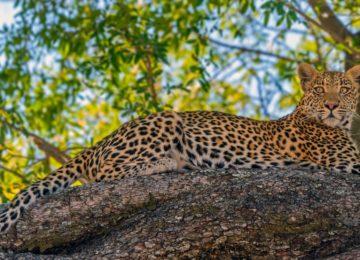 Afrika – Botswana, Sanctuary Chief's Camp