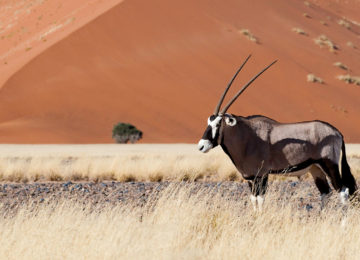 Afrika – Namibia