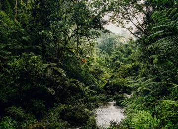Nyungwe House_Activities_Waterfall_Trek_©Kerzner International