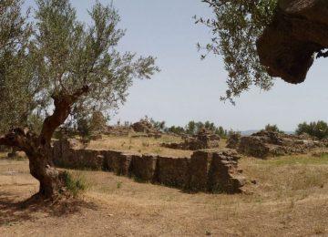 Olinebäume und Ruinen Peloponnes