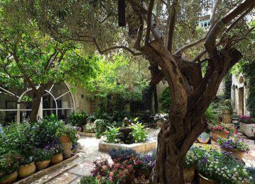 Olivenbaum Garten American Colony Hotel Jerusalem