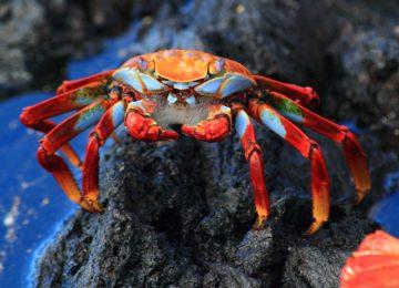 PRIMER LUGAR- NETTIE & WAGNER Foaming crab © Kleintours
