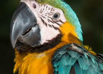 Papagei©Anavilhanas Jungle Lodge
