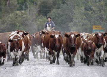 Patagonien Offroad Carretera, Termas de Puyuhuapi