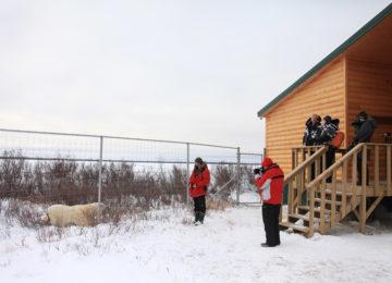 Polar Bear FencePlane©Dymond Lake Eco Lodge–Dafna Bennun