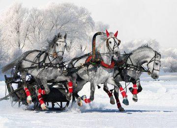 Radisson Blu St Petersburg Troika-Horse-ride-in-Pavlovsk-Park©Radisson Blu St Petersburg