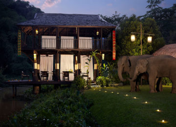 Rice paddy gala dinner with Elephant companions © Anantara Golden Triangle Elephant Camp Resort