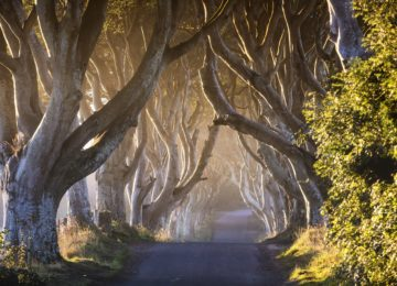 The Dark Hedges_The Kingsroad Irland