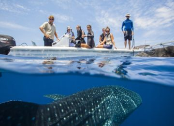 The Whale Sharks of Cenderawasih Bay©TRUE NORTH