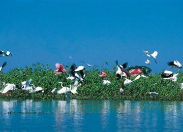 Vogelwelt, Pantanal ,Brasilien,Luxusreise