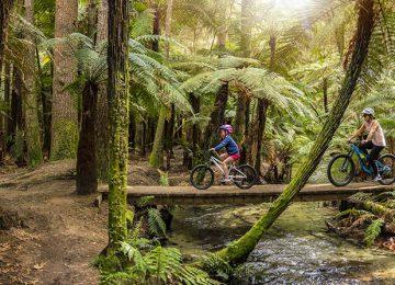 Whakarewarewa Forest Rotorua © Julian Apse – Tourism New Zealand