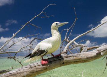 alphonse-island-birds-sea-bird