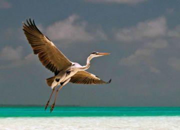 alphonse-island-fauna