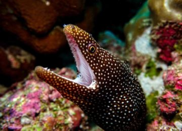 alphonse-island-marine-life-Eel