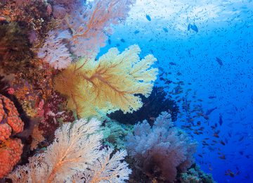 Select Luxury Travel Aqua Blu Indonesien Raja Ampat Colourful abundant underwater seascape 2